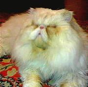 Кот-Экстремал ждёт подружку.