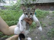 Котенок очень ждет Вас!