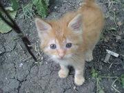 Отдам рыженького котенка в добрые руки