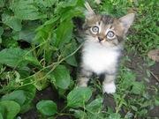 Очень красивый котёнок Марсик ищет хозяев!