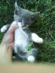 Котенок девочка 1мес отдам в хорошие руки