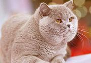 Если ваша кошка просит кота - вам к нам!