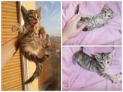 Котенок-девочка в хорошие руки