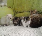 Котята Херсон,  котята