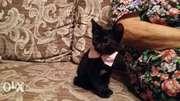 Самые милые котята,  г. Киев