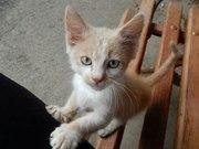 Котенок Кирен ищет дом!