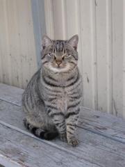 Молодой котик ищет дом!